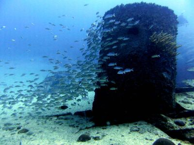 The Wreck Diving Spot Las Galeras Samana