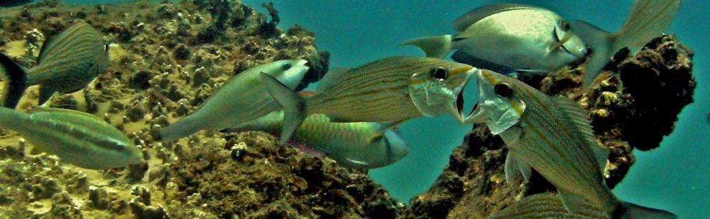 Tropical Sea Divers, Bienvenue, Votre centre de Plongée à Boca Chica