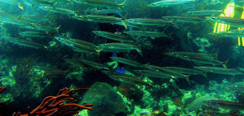 Centre de Plongée Français PADI à Bayahibe  PADI Open Water Diver  Cours