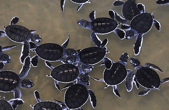 bébés tortues de terre